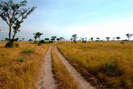Uganda Deluxe Safari